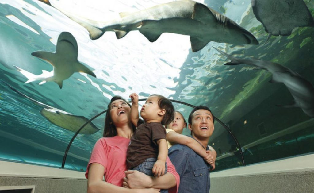 6 Family-friendly Activities in Sydney